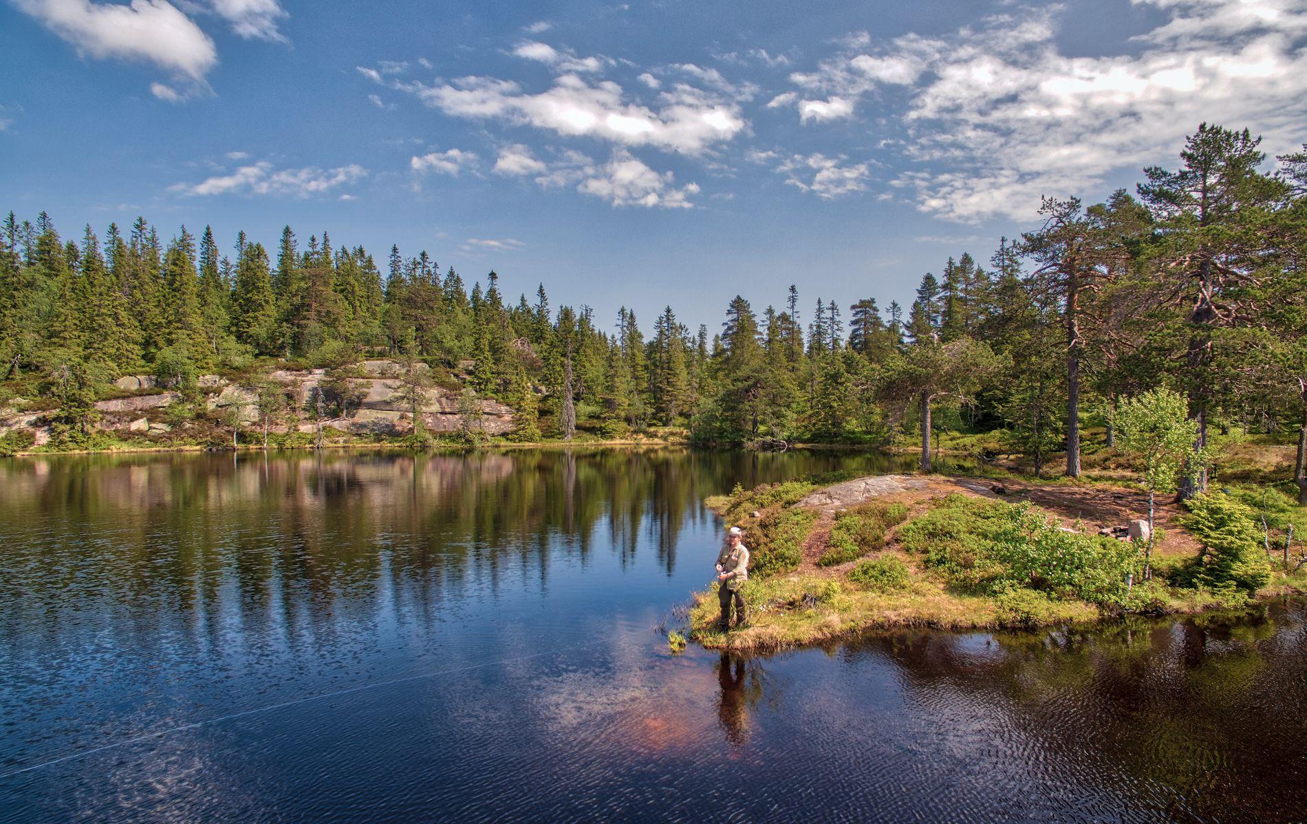 Her finner du de fineste turene i din egen skog – VG