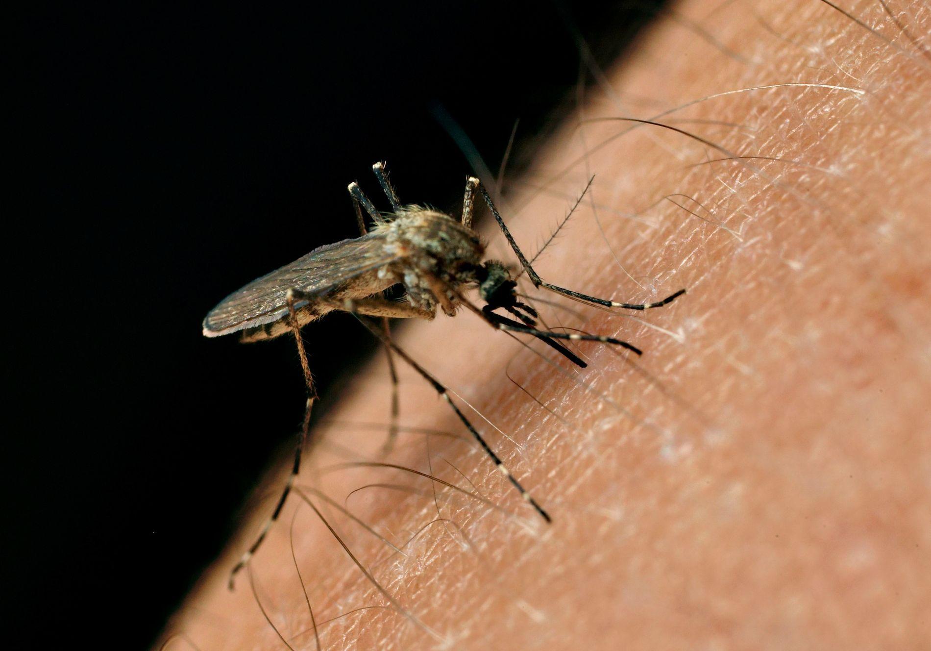få bort mygg