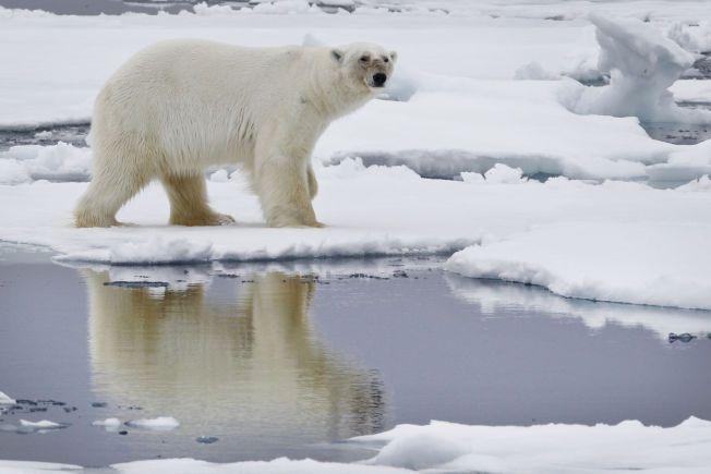 Turister angrepet av isbjørn på Svalbard – VG